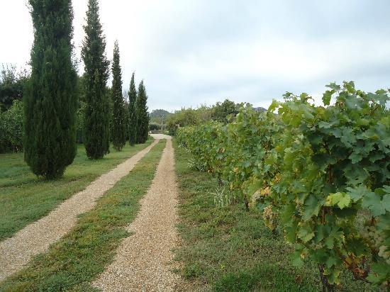 Mas de la Croix d'Arles : garden