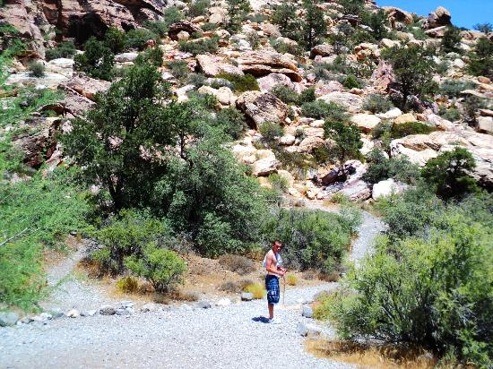 Red Rock Canyon National Conservation Area: Red Rock Yeah