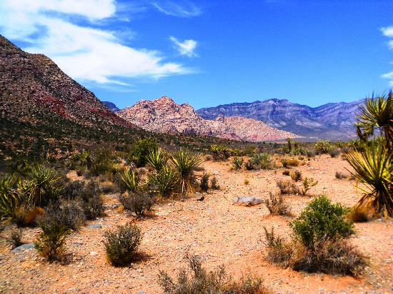 ‪‪Red Rock Canyon National Conservation Area‬: Red Rock Yeah‬