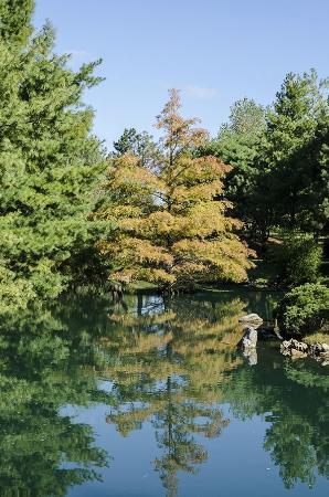 Mizumoto Japanese Stroll Garden: Fall tree at in the garden