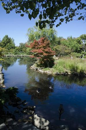 Mizumoto Japanese Stroll Garden: more fall tress in the garden