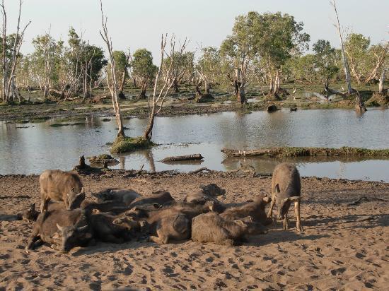 Bamurru Plains: panorama