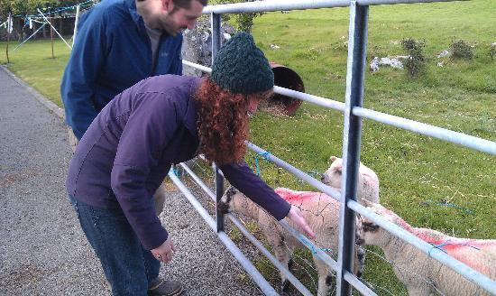 Hill View Farm: Lambs did a greaqt job of waking us up each morning. Baaaaa!