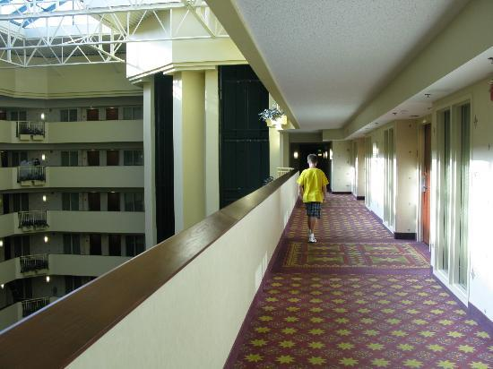 On The 7th Floor Picture Of Embassy Suites By Hilton Tampa Usf Near Busch Gardens Tampa