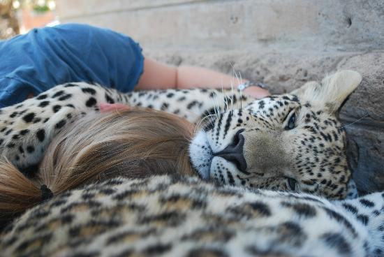 Gobabis, Namíbia: Falling asleep with the leopards