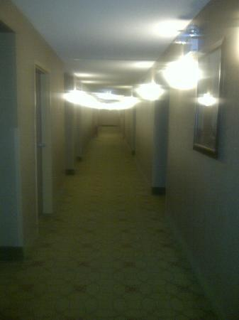 Homewood Suites by Hilton Chicago Downtown: Our floor hallway