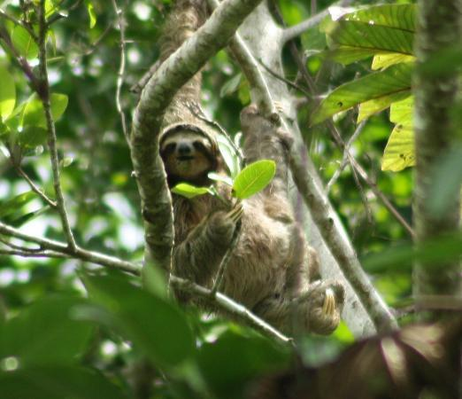 La Finca Chica: This guy was right above our house!