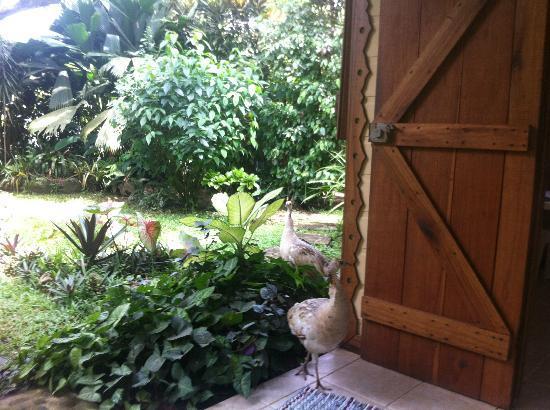 La Finca Chica: Visitors