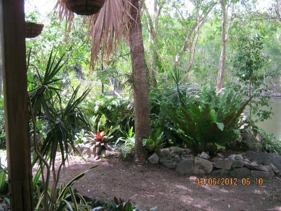 Billabong Bed & Breakfast: View from Tropical Room