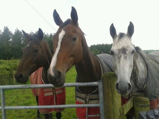 Thorniewhats Livery Yard & B&B: Other residents