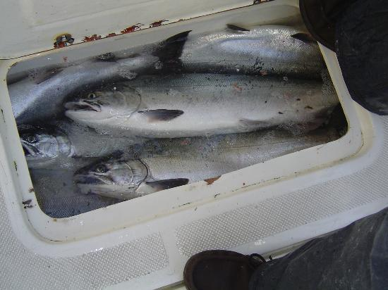 D and D Fishing Charters: full cooler on board