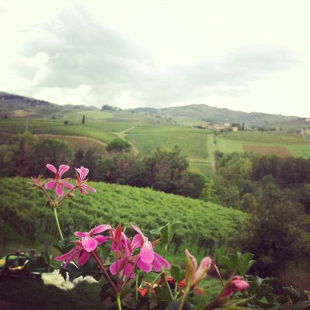 Tuscan Wine Tours by Grape Tours : Tuscany
