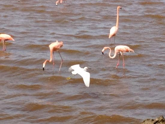 Lake Gotomeer: ... es ist so schön