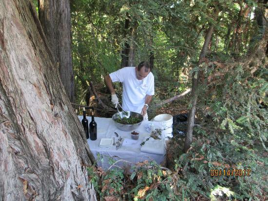 VGS Chateau Potelle : Tony and the magic tree