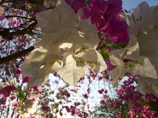 Fidelito Ranch & Lodge: Farbenpracht auf dem Gelände der Fidelito Ranch