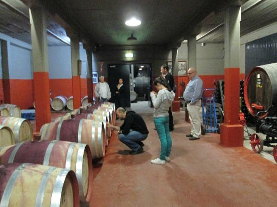 Penfolds Magill Estate Cellar Door: Every keg worth half a million dollars !!
