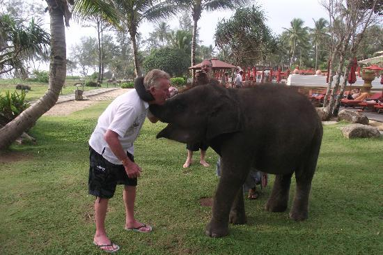 ‪‪Marriott's Phuket Beach Club‬: Elephant kisses