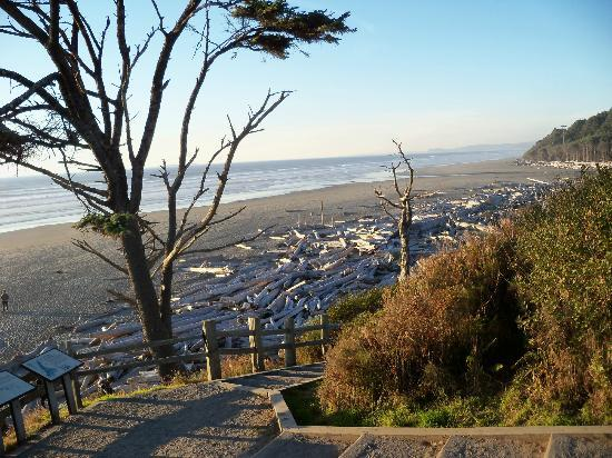 Kalaloch Lodge in Olympic National Park: Beach
