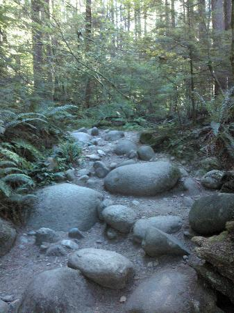 Lynn Canyon Park: at times there are many stones and tree roots in the way