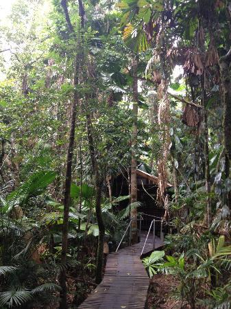 Daintree Wilderness Lodge: Our Cabin.