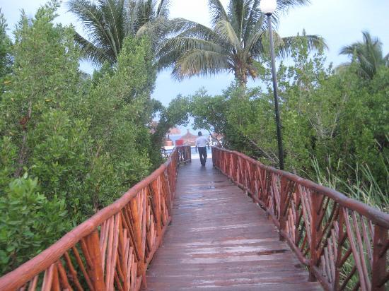 Occidental Grand Cozumel: Bridge through the mangroves.