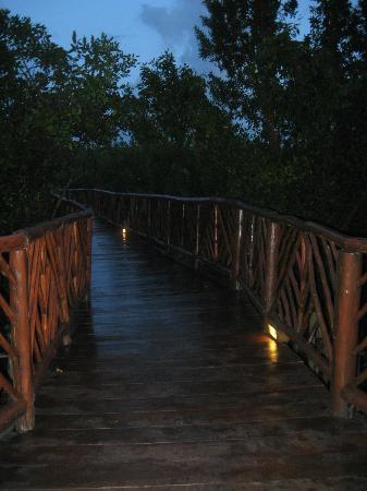 Occidental Grand Cozumel: Bridge through the mangroves at night.