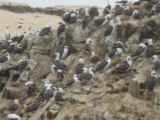 Emotion Tour Peru: aves