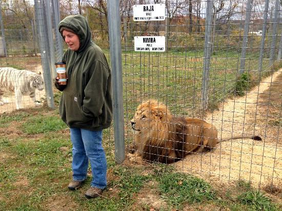 Wisconsin Big Cat Rescue: The keeper has been caring for this lion for 8 years.