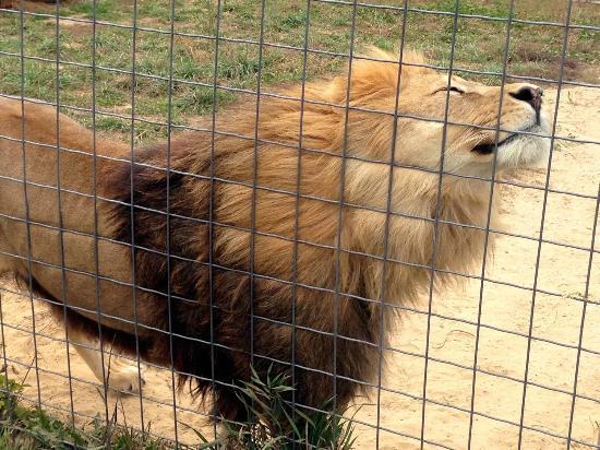 Wisconsin Big Cat Rescue: Itch!