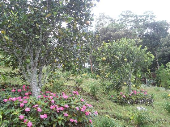 Cabanas El Parador: Arboles frutales