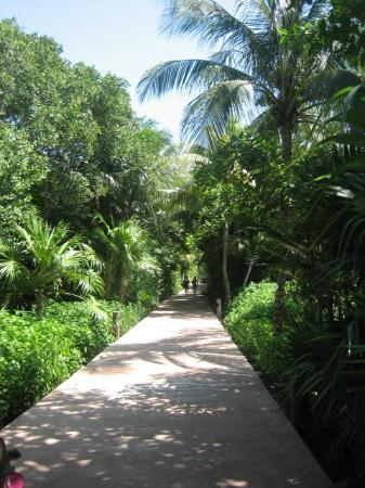 Catalonia Playa Maroma: Path to the privileged rooms