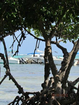 Caye Casa: View through mangroves near Cye casa dock