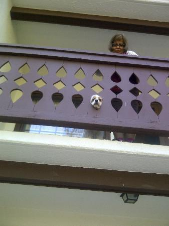 Helendorf River Inn and Conference Center: Cookie-Girl peeping out of the balcony