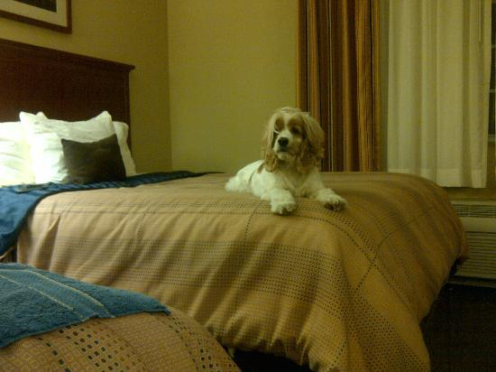 Candlewood Suites Tallahassee: Cookie-Girl Loves the bed