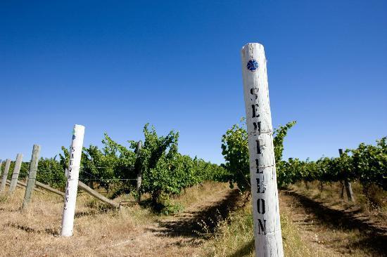 Cape Jaffa Wines: Cape Jaffa vineyard before 2012 vintage