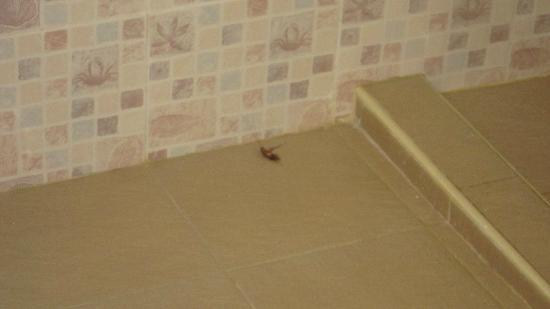 Dumaluan Beach Resort: Cockroach found in executive bathroom