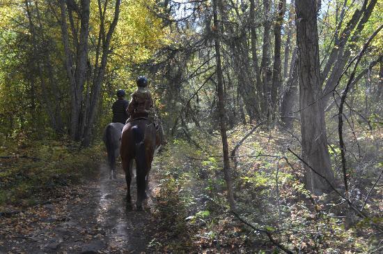 Myra Canyon Ranch B&B: Trail Ride
