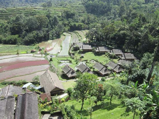 Royal Tulip Saranam Resort & Spa: ricefield