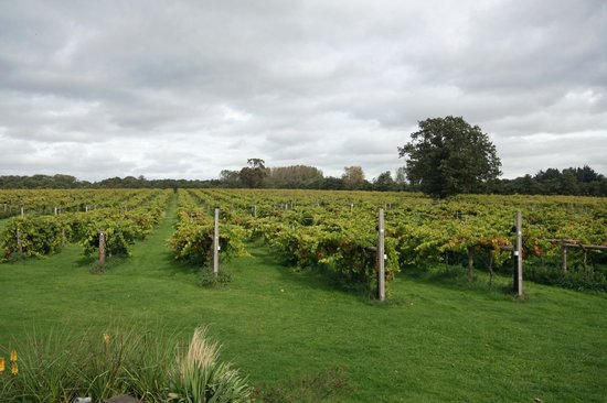 Shedfield, UK: The Vineyard