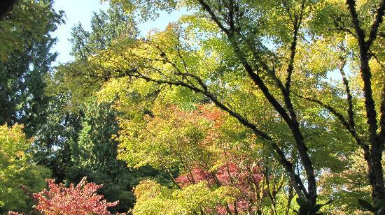 Bellevue Botanical Garden: Bellevue Botanical Gardens