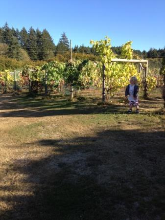 Carbrea Winery: the vineyard