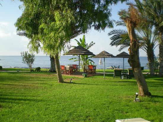 Constantinou Bros Athena Royal Beach Hotel: View from the grounds