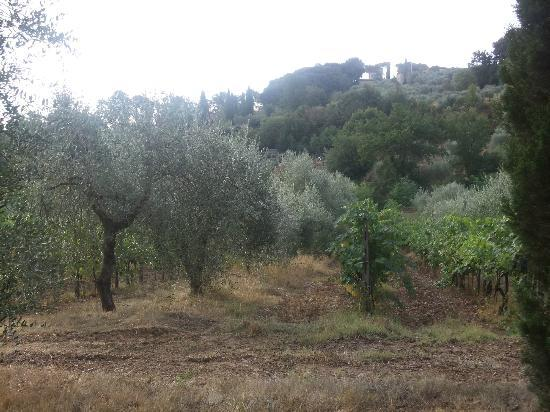 Agriturismo Malafrasca: Olive trees and the vineyard