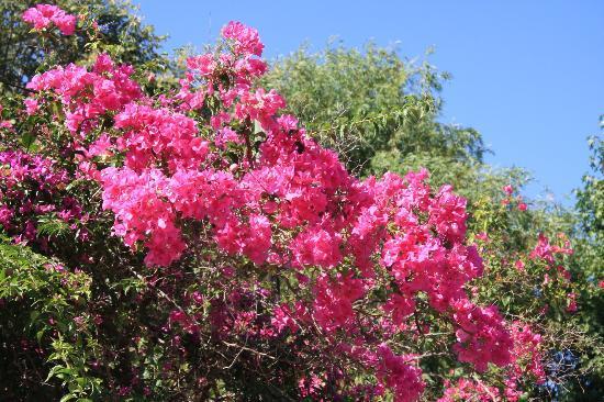 Dalyan Resort: Gardens