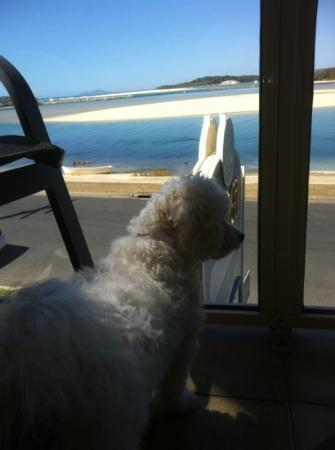Marcel Towers: My puppy enjoying the view from the balcony :-)