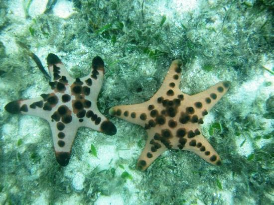 Dive Thru Scuba Resort - Bohol: My new sea buddies