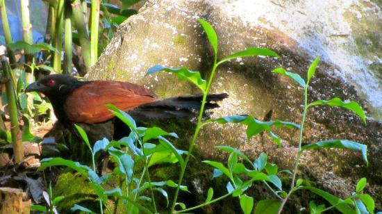 Rainforest Edge: the bird on hotel grounds