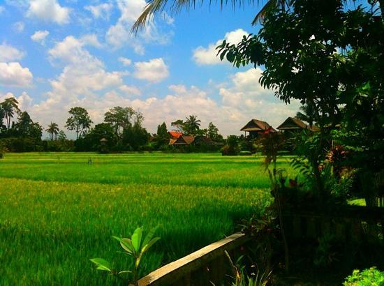 Tegal Sari: view from rm 11