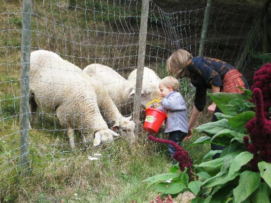 "Le Schaeferhof : Feeding the ""neighbors"""