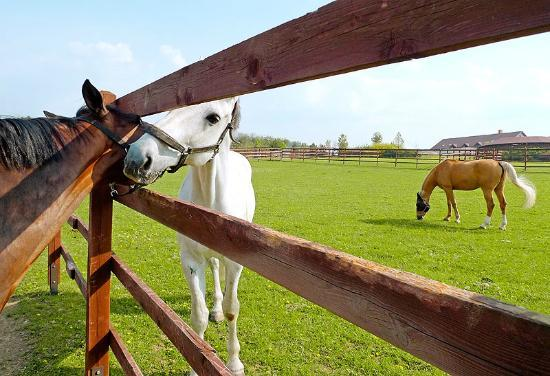 K-Triumf: horses